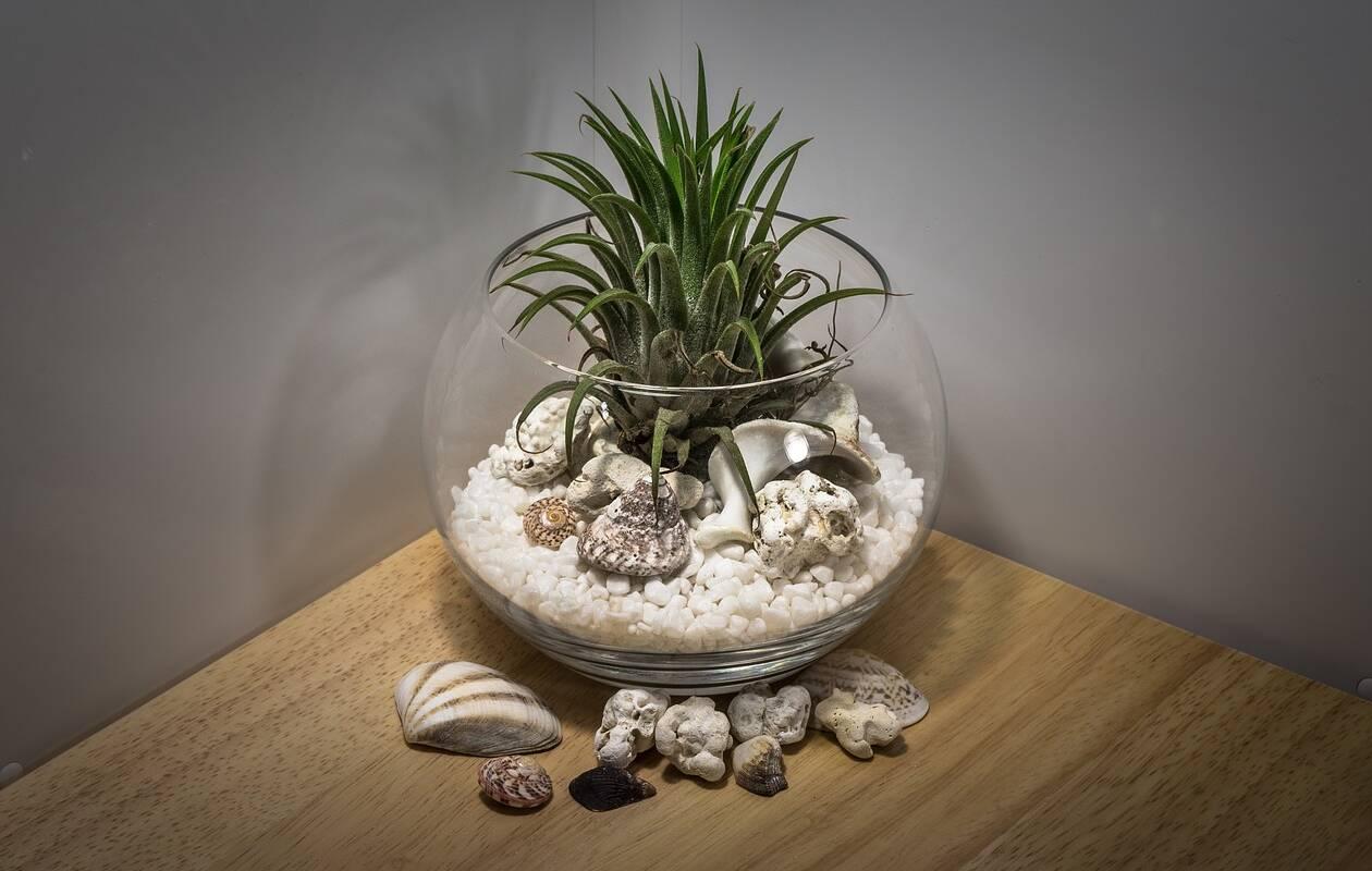 Vlhkomilné rostlinné terárium
